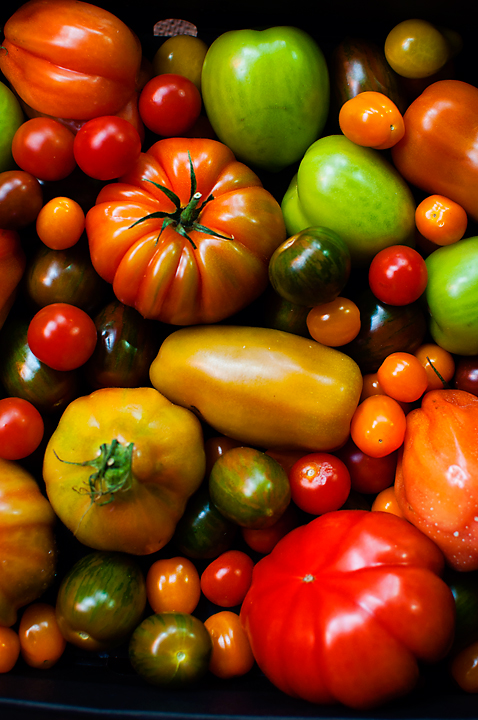 The world of tomatoes